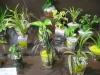 - ミニ観葉植物・ユーロサンド植え -