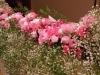- メインテーブル装花 -
