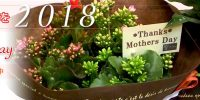~2018~MOTHER'S DAY 5/13(日曜)